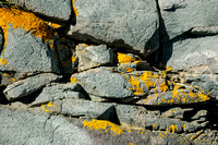 Orange Lichen on Rock